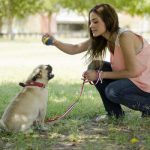 doggy dans online dog trainer review
